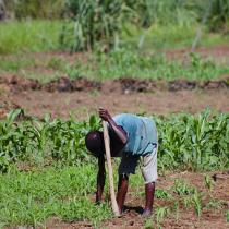 Exploitants agricoles